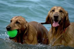 Best Dog Water Toys